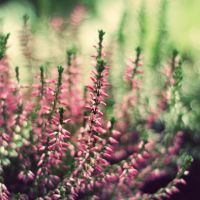 Pink in autumn by BlueColoursOfNature