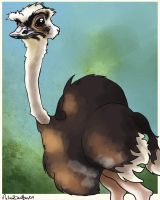 Ostrich by tremblinglight