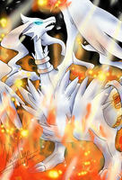 Reshiram on Fire by KatheChan