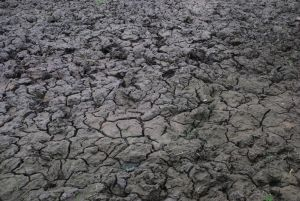 Cracked Mud by CompassLogicStock