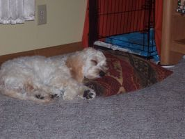 My Dog sleeping by jackcat2007