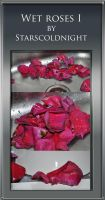 Wet rose petals stock by starscoldnight by StarsColdNight