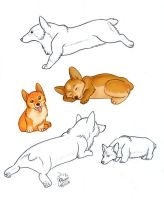 Welsh Corgies 2 by Dalamar89
