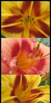 Lily Trial by picworth1000wrds