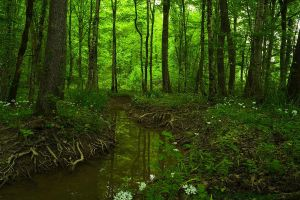 Forest Stream by LillianEvill