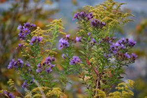 Fall Weeds by Gr8-Gatensby