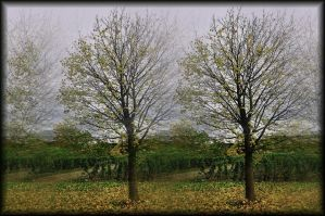 Autumn impression by Wetterlage