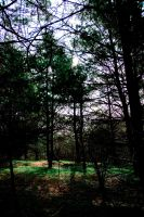 Shady Pines by DavidBComfort