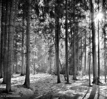 Forest 9 by orlibraorli