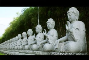 Buddha Statues by Evodie