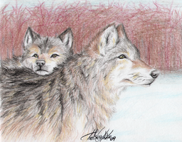 Drawing 3 Project - Wolves by Fox7XD