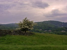 Countryside Tree by jenny4