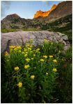 Colorado Flowers by michael-dalberti