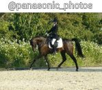 Dressage Competition by AmazonaTifon-12