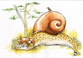 Savanah snail by Cervelet