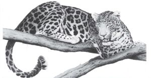 Leopard by mk-thommo