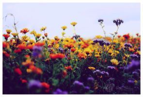 summer's beauty by Atreja