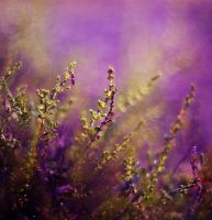 Green Heather vol.2 by Justine1985