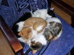 cat pile by i-love-murphy