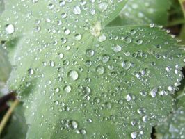 Raindrops on leaf 2 by CaringheartTTR