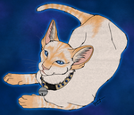 Little Red Siamese by kcravenyote