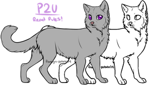 Warrior Cat Lines: Warrior by foreign-potato