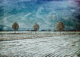 cold winter by rockmylife