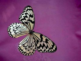 Butterfly stock 2 by FairieGoodMother