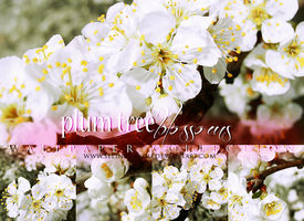 Plum tree blossoms - wallpaper collection by selinmarsou