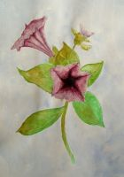 2009.12 - watercolor Flower by kostaskouk