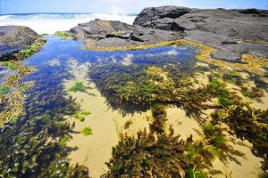 sandy rockpool by argopete