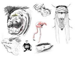 Animal Sketches by jfarsenault