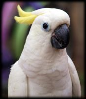 Me Parrot by pagan-live-style