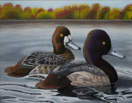 Scaups in Fall by lvadams