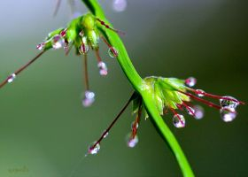 Grass Seed Drops by FallOut99