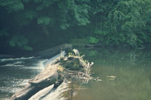 Heron on the river by perdita00