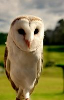 Barn Owl by jemapellenicoletta