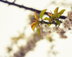 23 04 14.03 by prismatic-heart