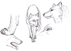 wolf sketshes realistic by arabdiggaren