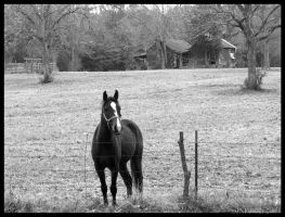 Country Horse by texasghost