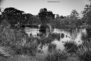 duck pond by Aneede