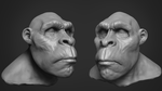 Zbrush Ape Character Sculpt by Grimnor