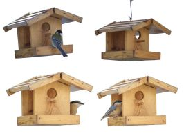 little house birds png by gd08