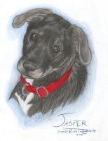 Pet Portrait: Jasper by NightTracker