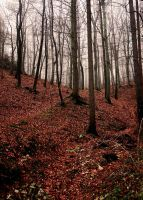 mystic forest by pauljavor