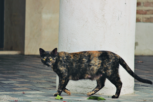 Animals: Street Cat by Abletodoall