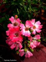 Group of Pink Flowers by gdsbngd2me