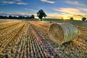 Last of the Bales by Bootcoot