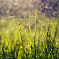 .: grass :. by all17