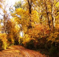 Autumn of 2011_09 by sloeb